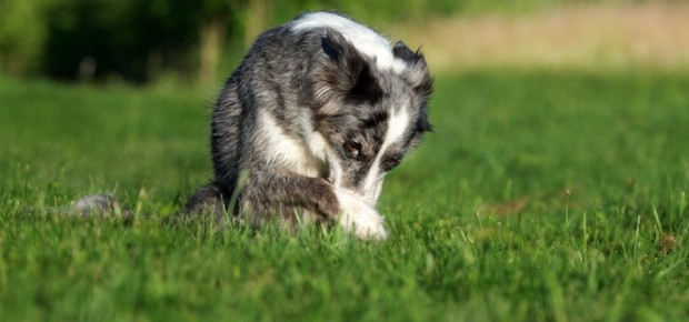 Dogs With Flatulence Problems.