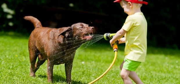 Looking After Your Pets in the Heat