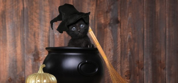 Halloween Party for Your Pets!!