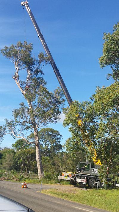 Central Coast Stump Grinding Newcastle Joel Wheeler