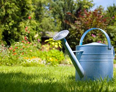 Lifestyle garden maintenance cleaning services for Cleaning and gardening services