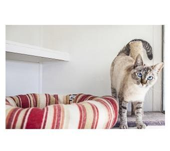 Cat Accomodation