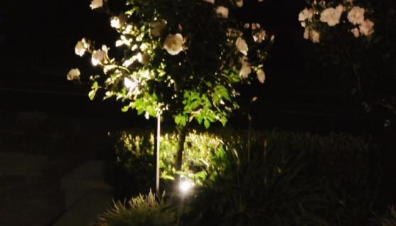 Outdoor lighting design ideas get inspired by photos of outdoor outdoor lighting ideas by perth garden lights aloadofball