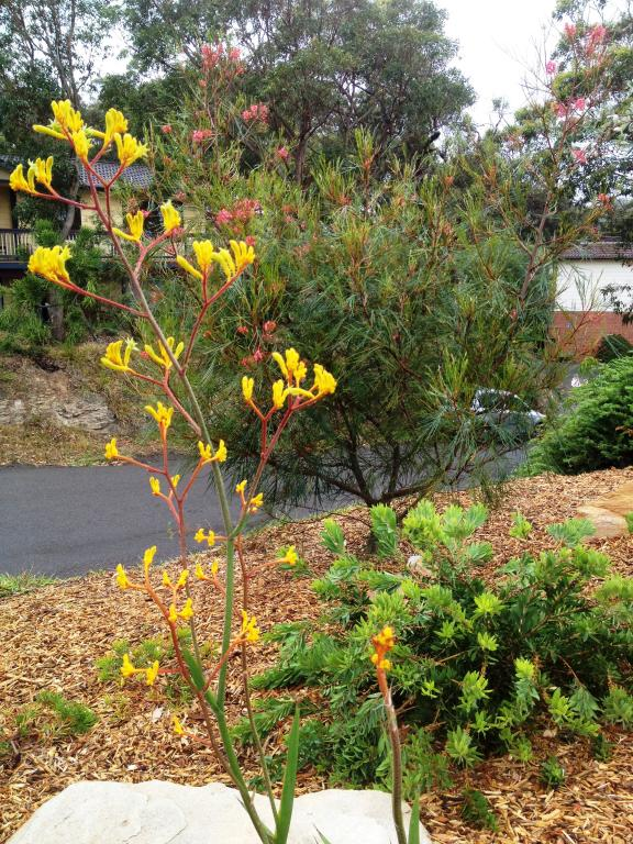 Get Inspired By Photos Of Gardens From Australian