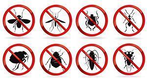 Express Pest Control Parramatta Smithfield 13 Reviews