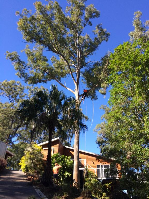 Big Jim S Tree Service Amp Woodchipping Ormeau 1 Reviews