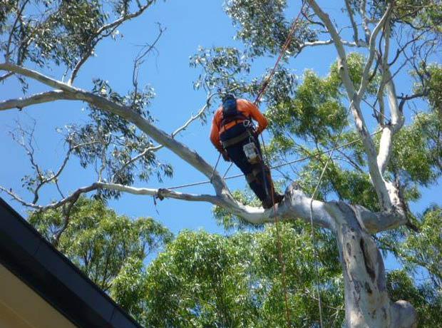 Hugh Wood Tree Lopping Yeppoon Reviews
