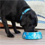Rogz 2 in 1 Bubble Dog Bowl Turquoise Paws Design