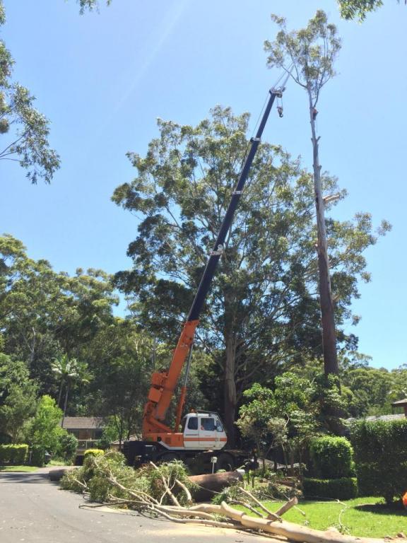 Ben Hastings Tree Service P L Central Coast Newcastle