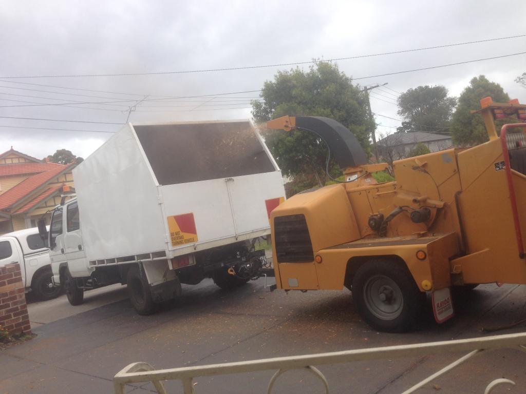 JEDIDIAH 39 S TREE SERVICES Craigieburn Dom Ulufale 23