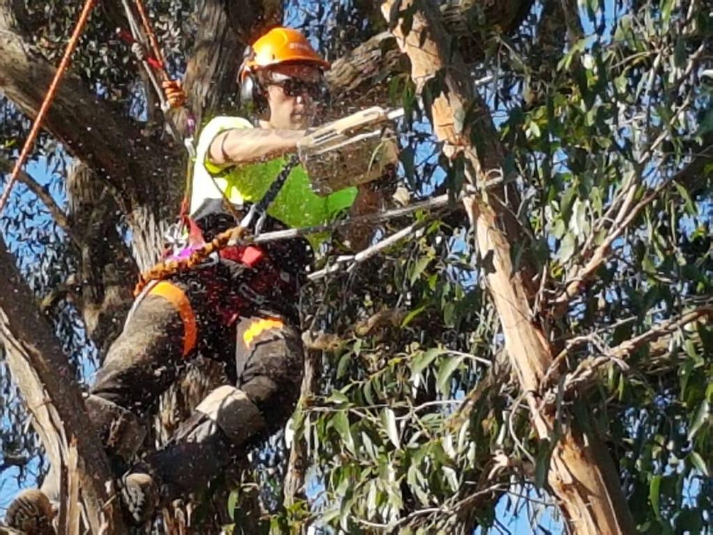 Skyhigh Tree Works Melbourne City Toorak Hawthorn