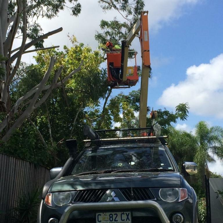 Mick S Mulching Tree Services The Entire Gold Coast