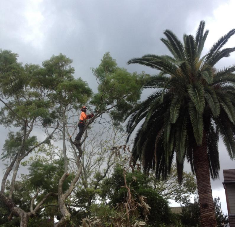 Twisted Twig Tree Service All Areas Of Lake Macquarie