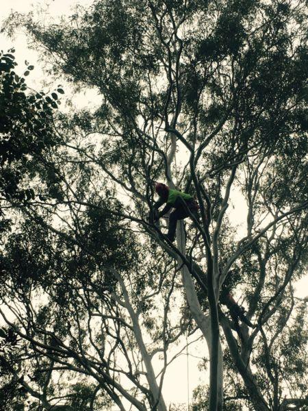 Trinity Tree Service Thornlands 9 Recommendations