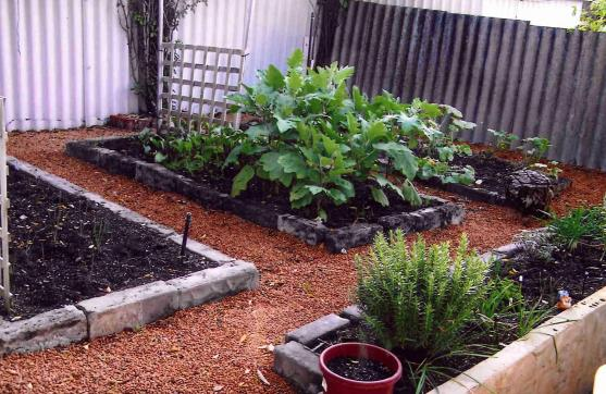 Vegetable garden design ideas get inspired by photos of for Queensland garden design