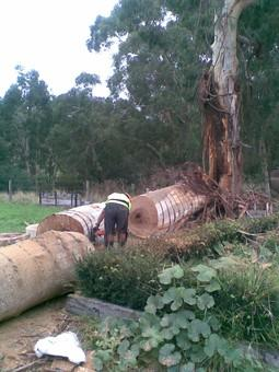 Len McKeown Tree Services Mt Evelyn Canterbury