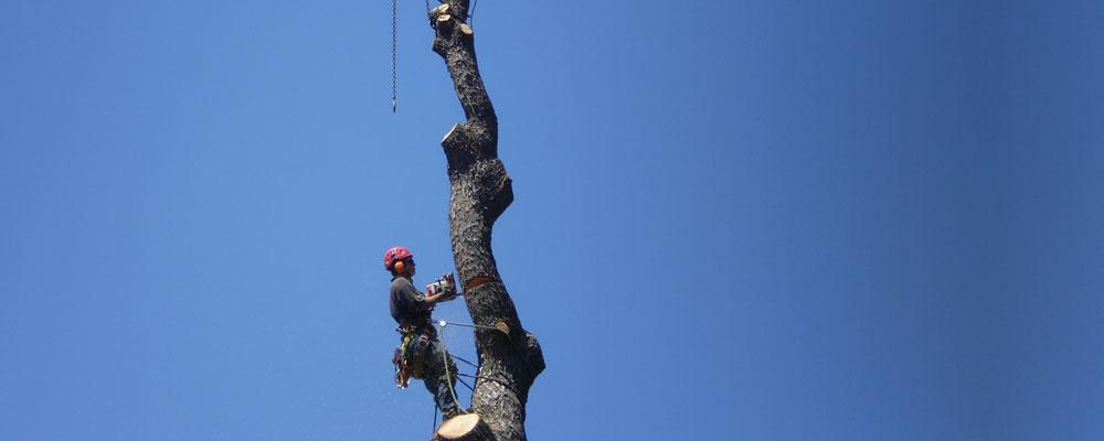 Treescape Professional Tree Services P L East