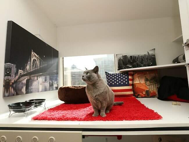 Pet Boutique, Condo's, Maxi Condos and New York Apartments