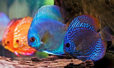 Ace Aquarium Services