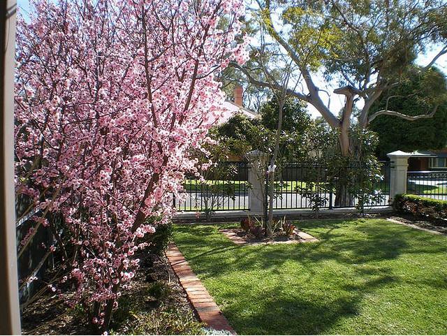 magnolia gardens general information about magnolias. Interior Design Ideas. Home Design Ideas