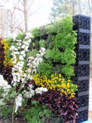 Vertical Garden Design Ideas by Atlantis Corporation Australia Pty Ltd