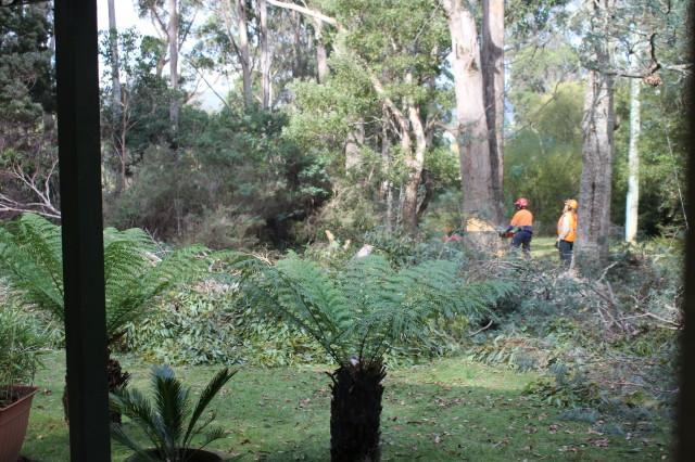 All Tree Solutions Tree Removal Tree Pruning Burnie