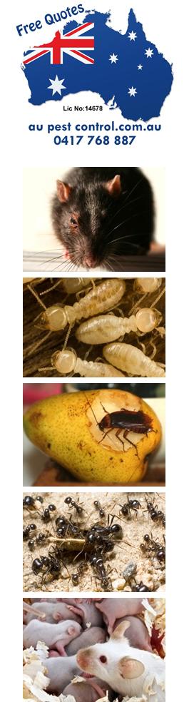 Au Pest Control Caboolture Northlakes Sunshine Coast