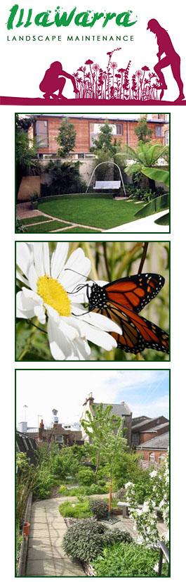 Illawarra Landscape Maintenance West Wollongong New