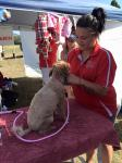 Our groomer at the dogs day out in Healesville
