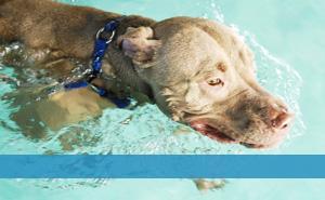 Canine Aquatic
