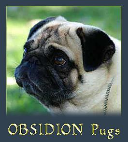 Obsidion Pugs