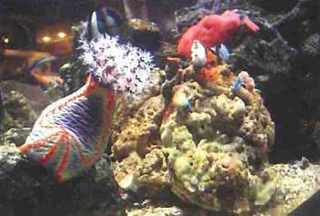 Aquarium Fish & Supplies