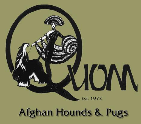 Quom Pugs & Afghan Hounds