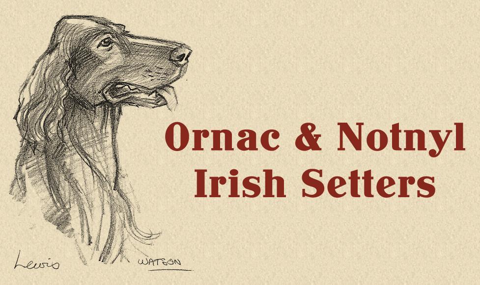 Ornac & Notnyl Irish Setters