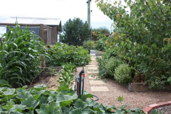 Vegetable Garden Designs by Yummy Gardens