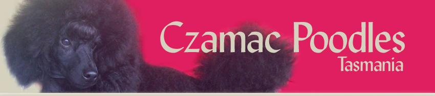 Czamac Poodles
