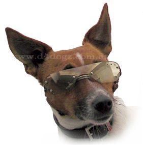 Dog Eyewear