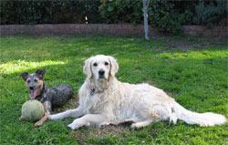 Kylie's pets, Diva and Cinda