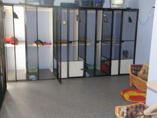 Our Cattery