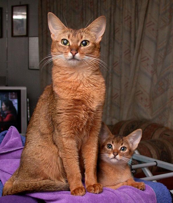 Tawny Cats