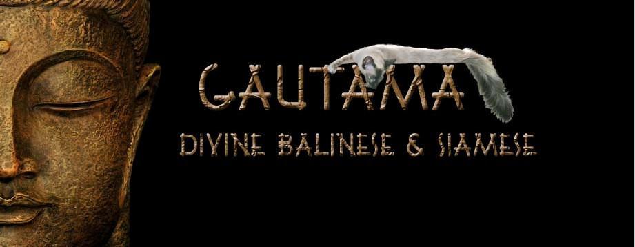 Gautama Divine Balinese Siamese
