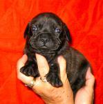 female 2 born 01-11-11