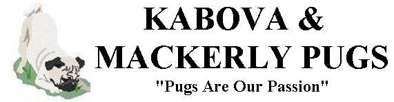 Kabova Pugs
