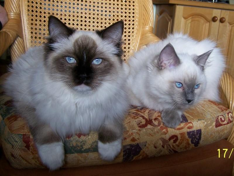 Our Cats 2