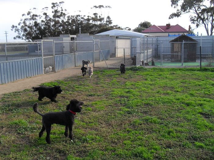 Our Kennel Facilities