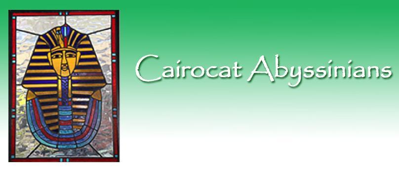Cairocat Abyssinians