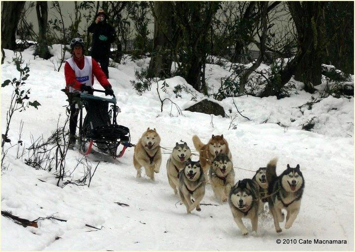 Taejaan Siberian Husky Racing