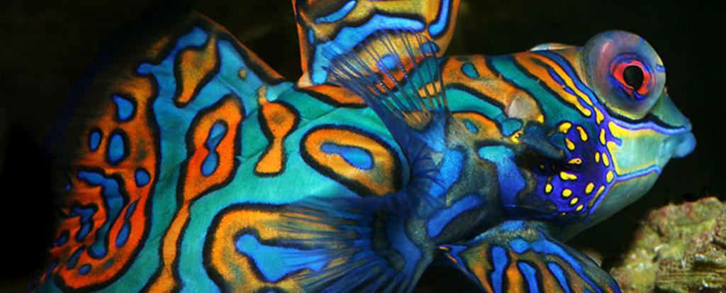 Hurstville Aquarium
