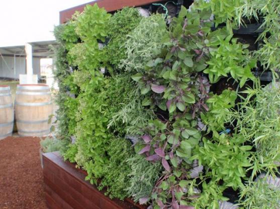 Vertical Garden Design Ideas by Cool Water Landscapes Pty Ltd