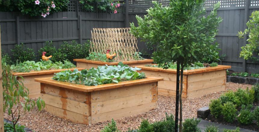 Vegetable gardens inspiration kitchen farmer australia for Veggie patch design